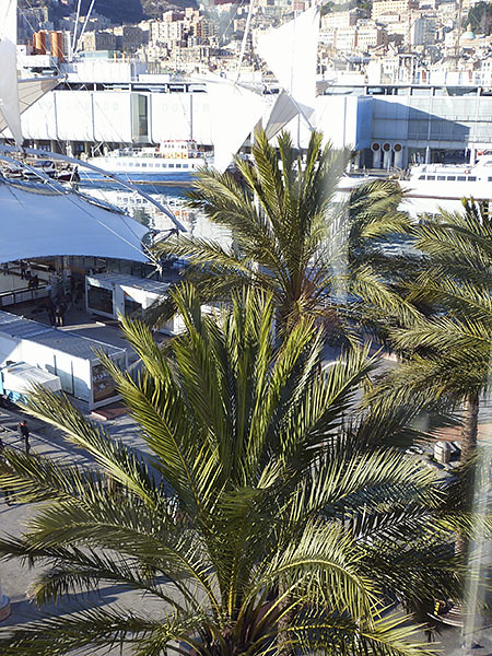 les palmiers du port