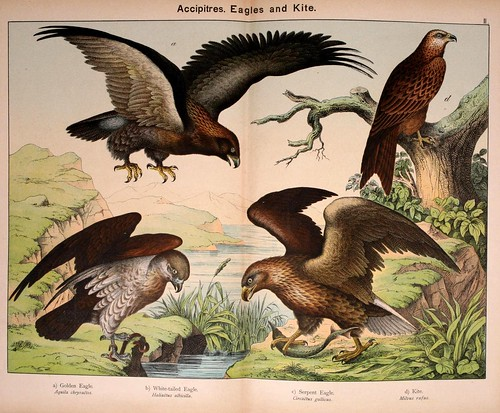 006-Natural history of the animal kingdom for the use of young people..- 1889-William Forsell Kirby