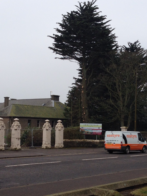 Felling of Monterey Cypress at Redevelopment of former Armistead Clinic Monifieth Road, Broughty Ferry, Dundee, 17 March 2015