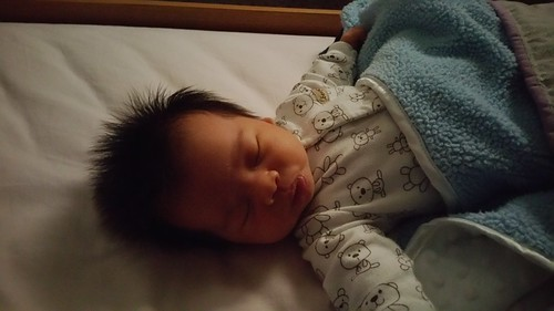 Parker at 5 Weeks Old | shirley shirley bo birley Blog
