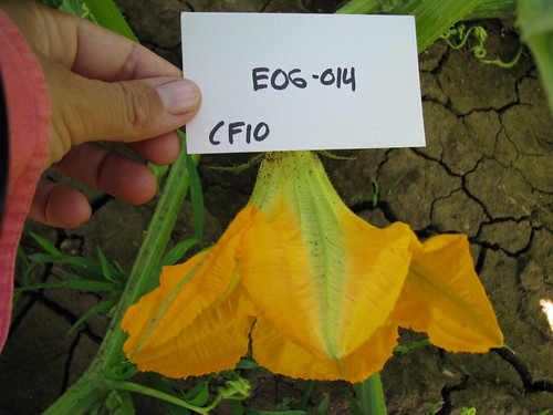 E06-014 CF10 Fl1