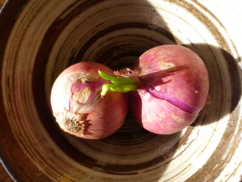 A pair of purple onions