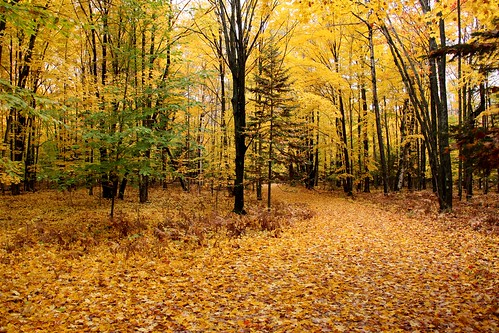 autumn fall fallcolors driveways petoskey michgan