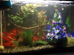 fish(1.0), marine biology(1.0), goldfish(1.0), aquarium lighting(1.0), freshwater aquarium(1.0), reef(1.0), aquarium(1.0),