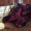hermiones everyday socks #knitting #14punkte2014