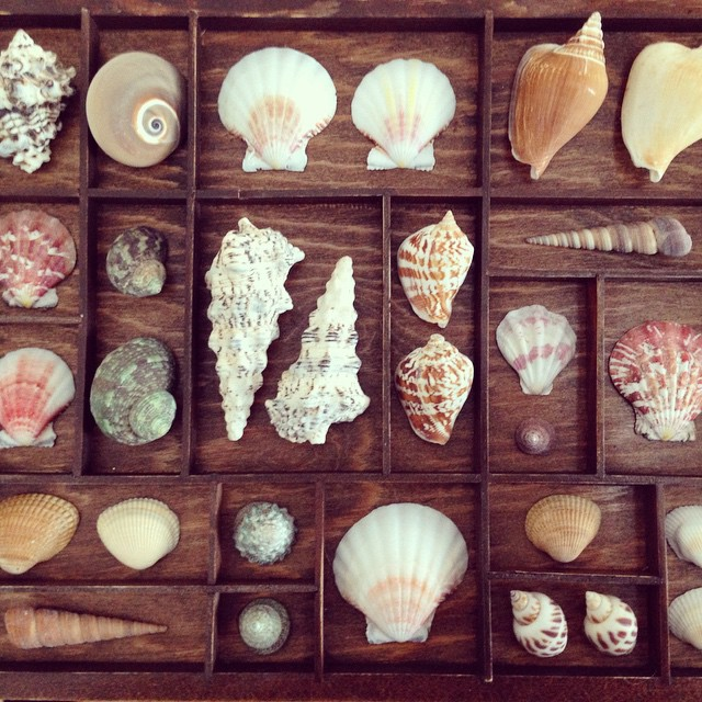 Seashell curio tray. Made as a Christmas gift. Good thing I have enough shells left over to make one for me.