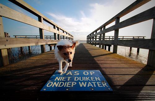 sunset dog water weather pier jetty dive dont medemblik jackrussel ijsselmeer tibey aanlegsteiger vooroever