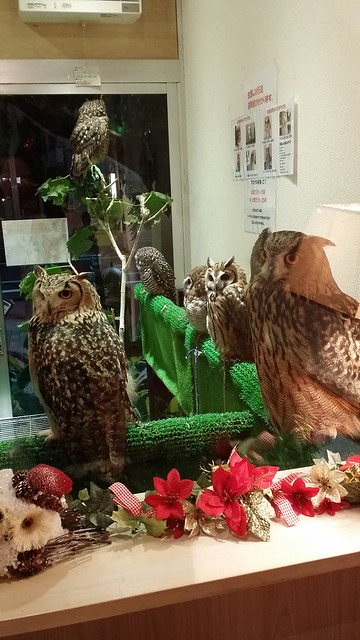 kiba owl cafe 2