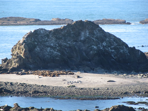 ocean oregon or pacificocean seals sealions reef harborseals stellersealions elephantseals californiasealions simpsonreefshellisland capearagobeachloop