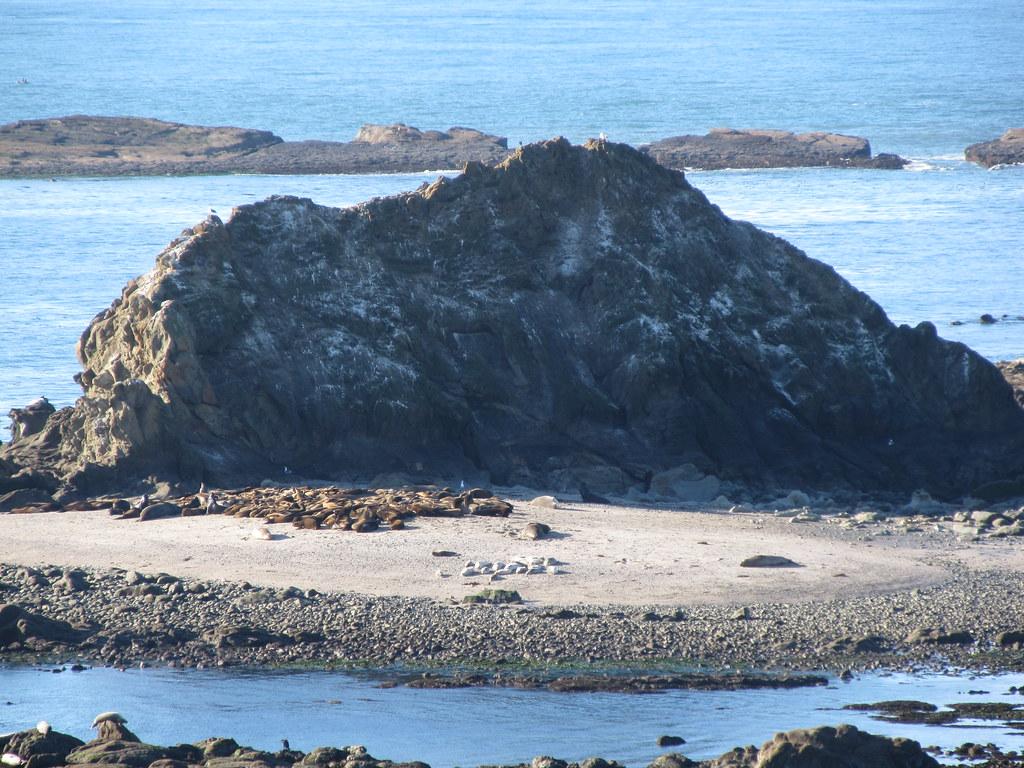 Shell Island Oregon Around Guides