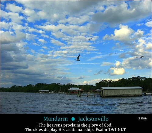 county blue sky usa bird water saint st clouds america docks river pier us dock florida united jacksonville mandarin fl states boathouse johns