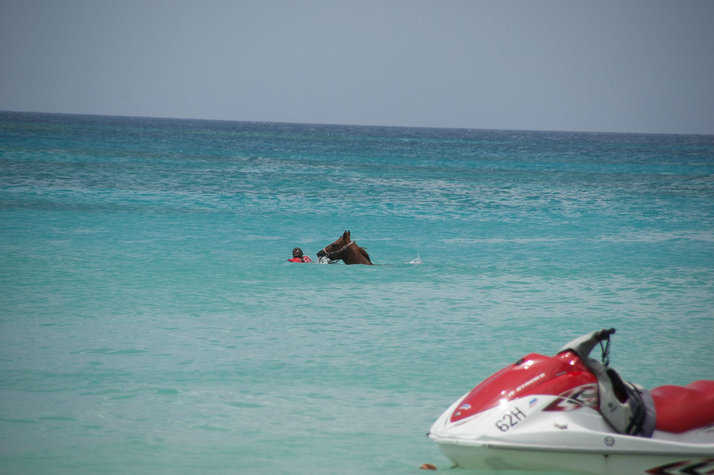 Horses in water at Malibu Beach in Barbados