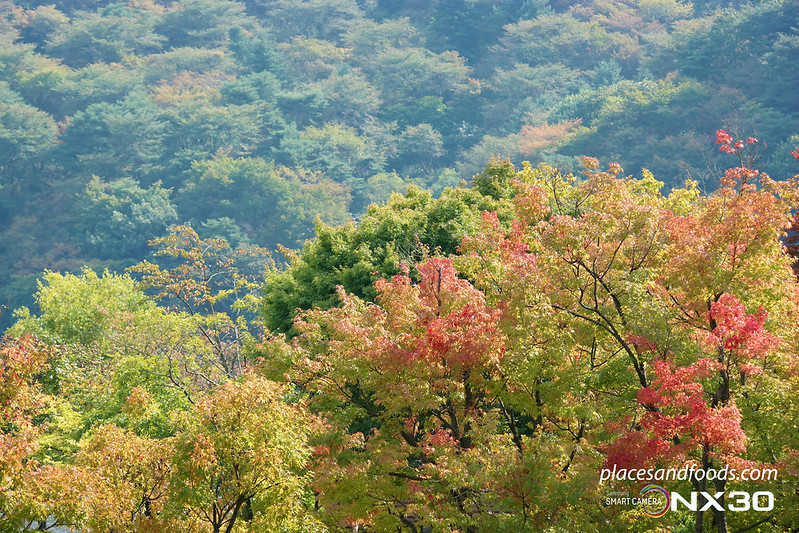 hee won garden autumn trees