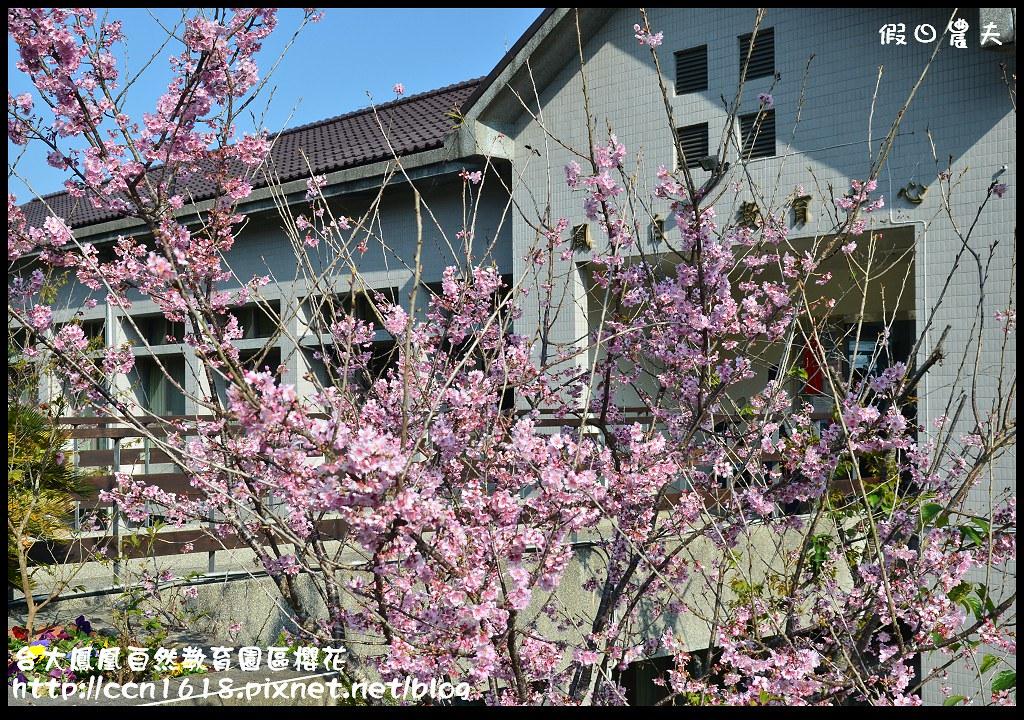 台大鳳凰自然教育園區櫻花DSC_6127