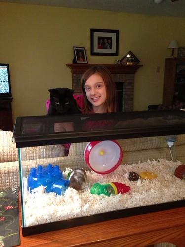 Kitty monitors the hamster activities
