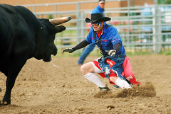 animal sports, rodeo, cattle-like mammal, bull, event, tradition, sports, matador, performance, bull riding,