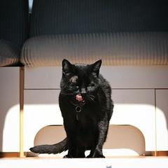 yoda the airstream cat.