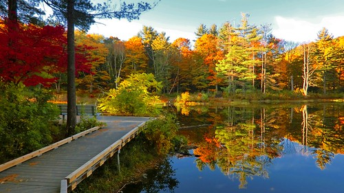 berkshires autumn brooksbos brooks color colour colours colorful fall geotagged landscape leaves lfoliage massachusetts newengland nature reflections reflection pond trees water woods casio zr1500 son remembrance family bereaved bereavement love dedication