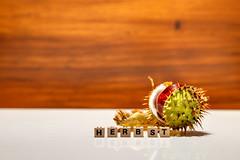 Kastanie mit Würfel - Herbst
