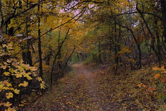 Walking path in fall