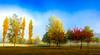 landa autumn 1