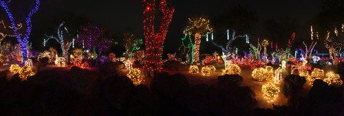 365/365 Cactus Garden Holiday Lights