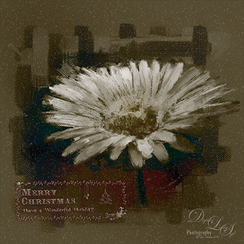 Image of a Christmas Card of a white gerbera daisy