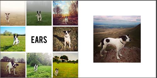 Rocky: A Dog's Life