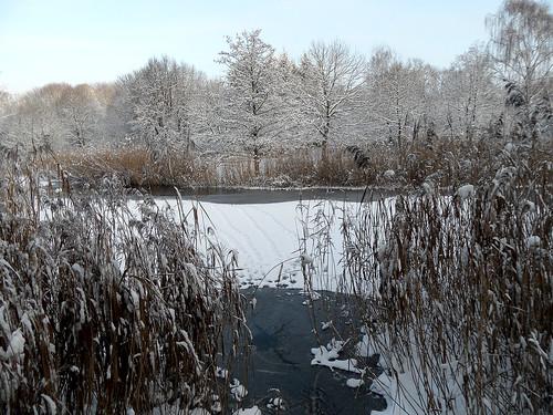 Zugefrorener Teich im Winter