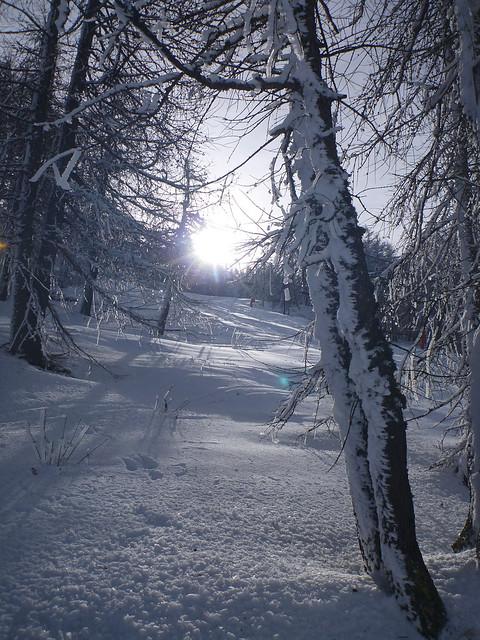 Candore nevoso