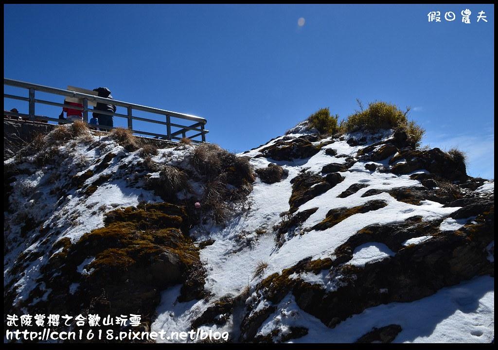 武陵賞櫻之合歡山玩雪DSC_5220