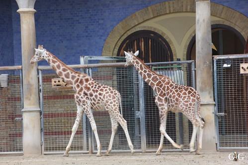 Berliner Zoo 22.02.201570