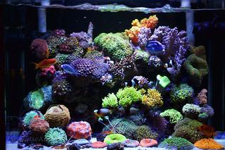 My Reef Tank (5th, Mar, 2015)