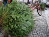 Verlassener Weihnachtsbaum 2014