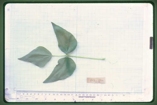 P12-056 CF02 L