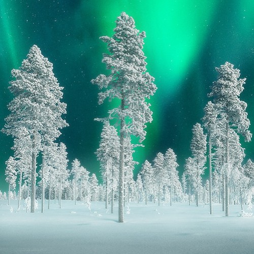 Forests of Finland and Northern Lights ..