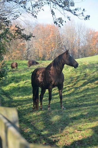 trees horses horse tree animal virginia nikon outdoor va virginiacreepertrail yabbadabbadoo abingdonva tamron18270 d5100 nikond5100