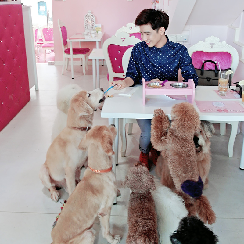 typicalben dog cafe