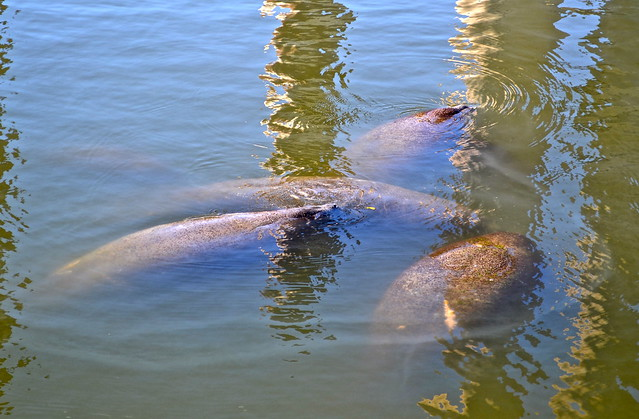Manatee Viewing Center