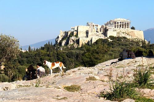 dog chien athens greece acropoli acropolis grèce athina acropole athènes