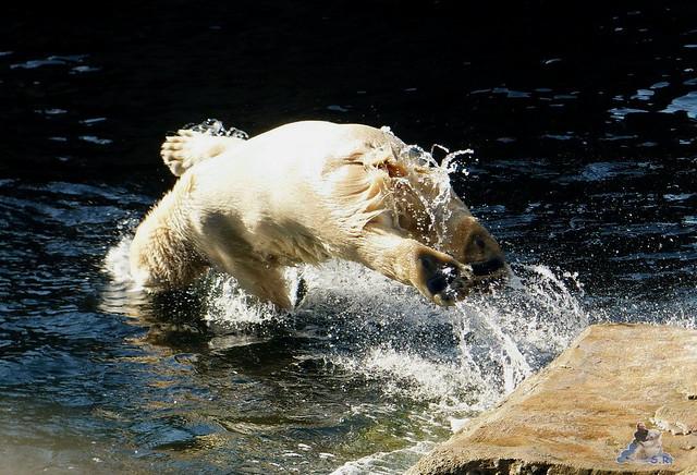 Zoo am Meer 08.03.2015  188