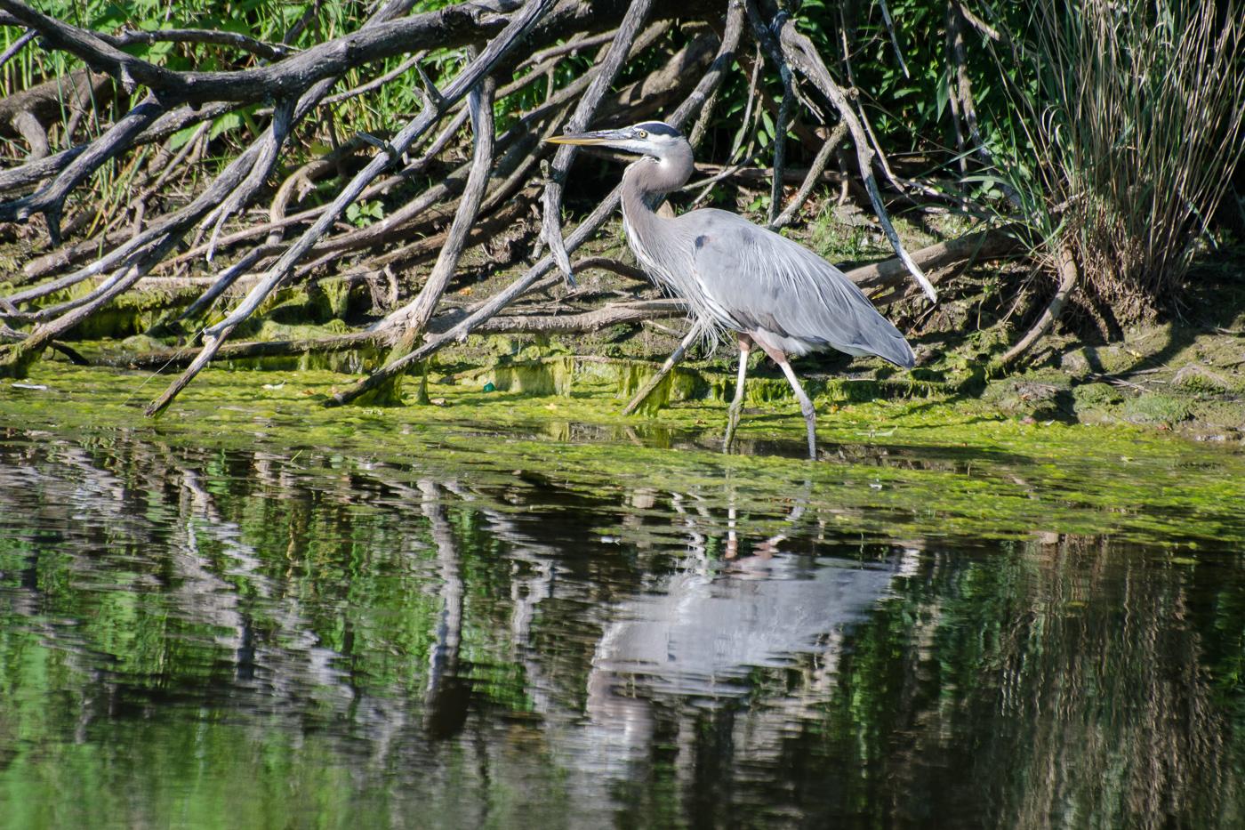 Loch Raven Nature Center