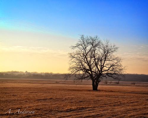 trees sunrise canon 66 rte