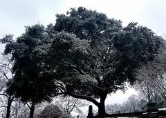 February 26. Tree