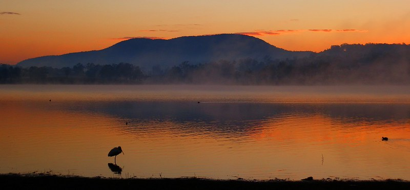 Sunrise Reflections with Spoonbill, Lake Moogerah