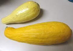 Yellow Squash.