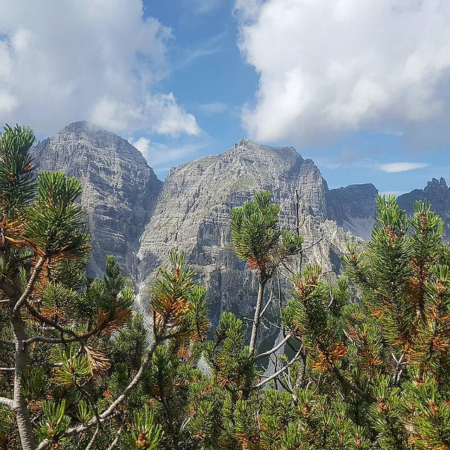 Photo:Lustwandeln #tirol #tyrolia #stubaital #mountains #alps #alpen #berge #treehugger #austria #nature #motherearth #earthlover #everydayisearthday #treeporn #treelovers #treesofinstagram #treecollection #natureisbeautiful #nothingisordinary #ourplanetdaily # By Stefan_Moser