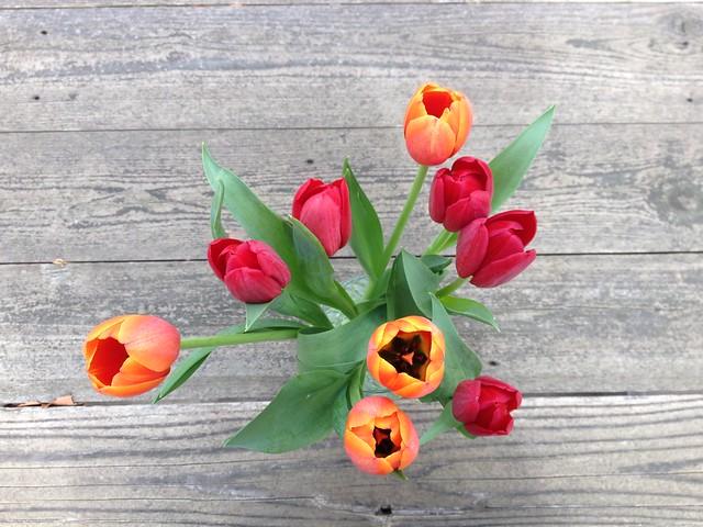 Almos spring
