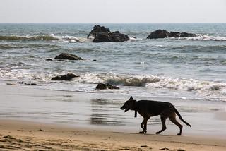 Зображення Wagh (Tiger) Arambol Beach. india beach goa arabiansea arambol canon60d