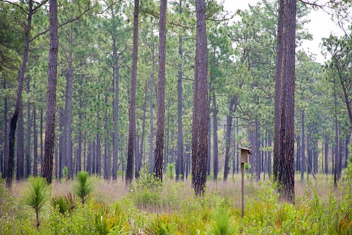Kreole Moss Point @ Sandhill Crane Refuge